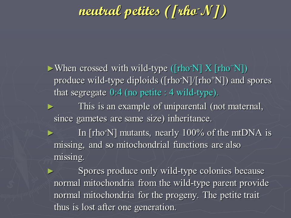 neutral petites ([rho-N])